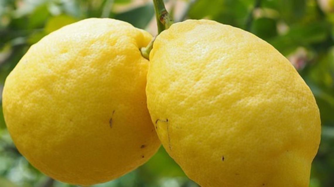 Lemon and Its Sister Citrus Fruits Do Help to Ward Off Stress.