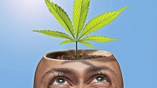Women Empowerment Through Planting Cannabis Here in India !