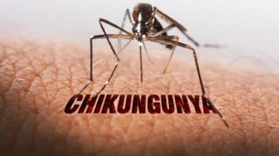 Everything You Need to Know About - Chikungunya