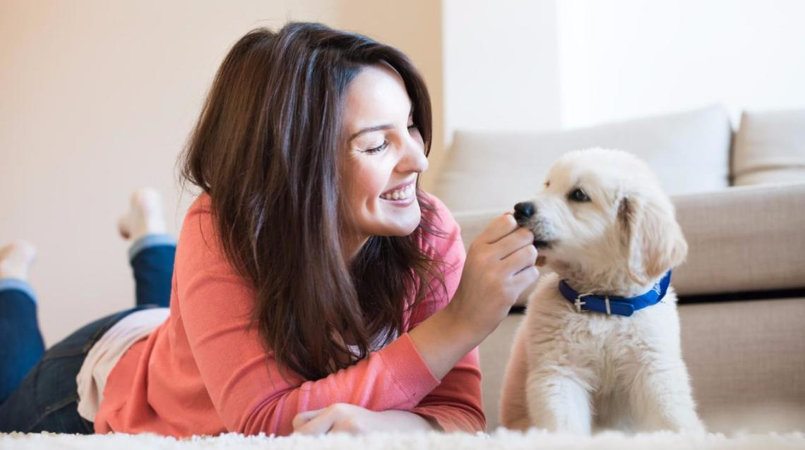 Pet Dog Scratched Pregnant Women - Hi, I'm 3 Months Pregnant