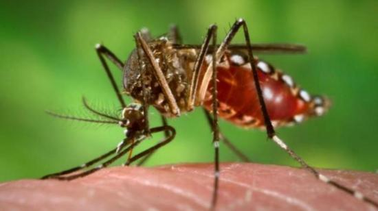 Is Chikungunya Causing You Joint Pains?