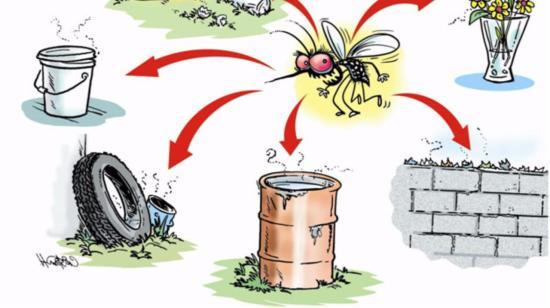 What We Can Do to Ensure Mosquito Free Surroundings