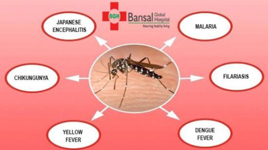 Importance of Differentiating Between Mosquito Borne Diseases