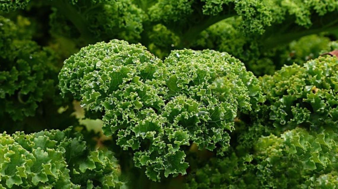 10 Interesting Facts About Kale