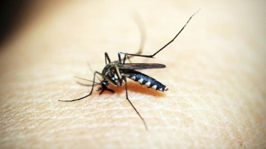 Be Careful With Dengue, Malaria and Chikungunya