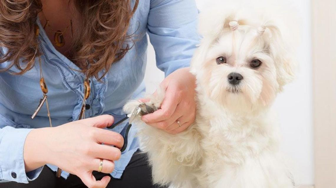 How to Trim Ur Dog's Nail ?
