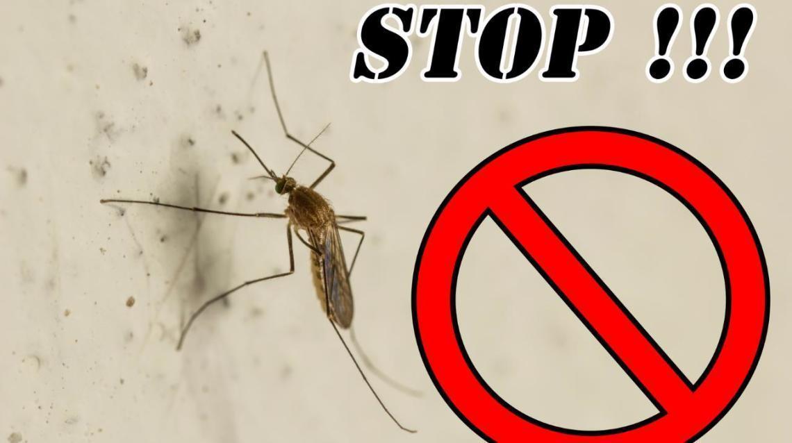 Chikungunya – Homeopathic Prevention and Management------