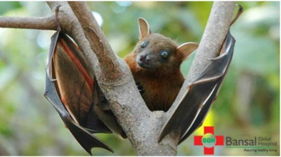 Nipah Virus : 5 Myths & Related Facts