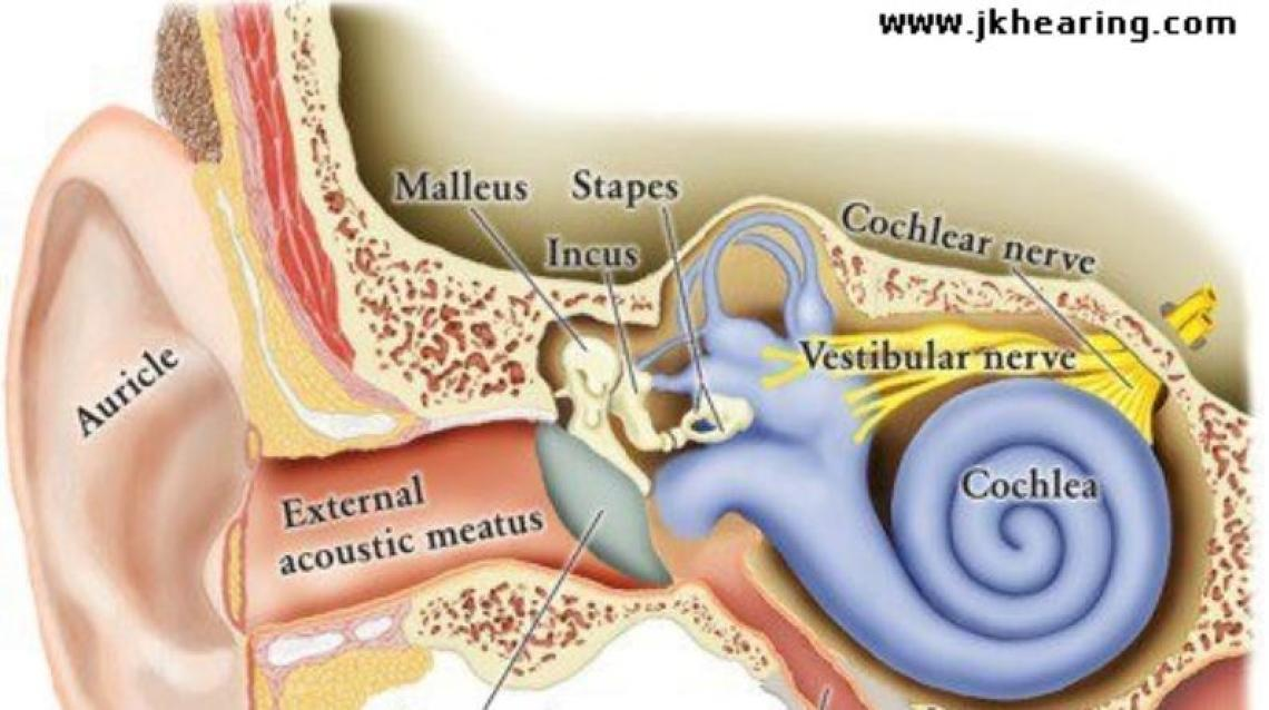 Preventing Hearing Loss In 8 Easy Ways