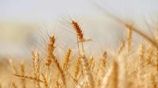 Nutrition Facts About Wheat Flour