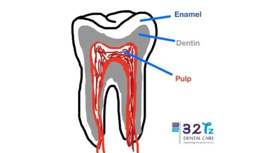 What Is Your Tooth Made Up of ?