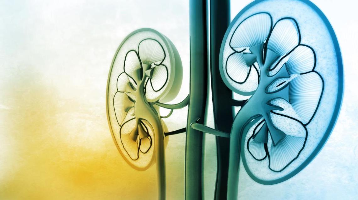 Tips for Preventing Kidney Diseases