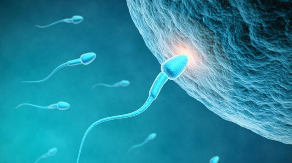 Myths & Facts About Ivf (Test Tube Baby)