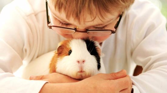 Raising Guinea Pig: Beginner's Guide
