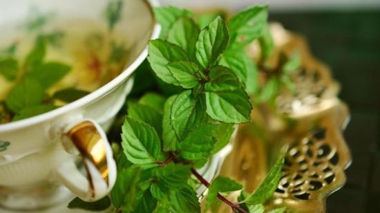 5 Reasons to make Green Tea your best Buddy
