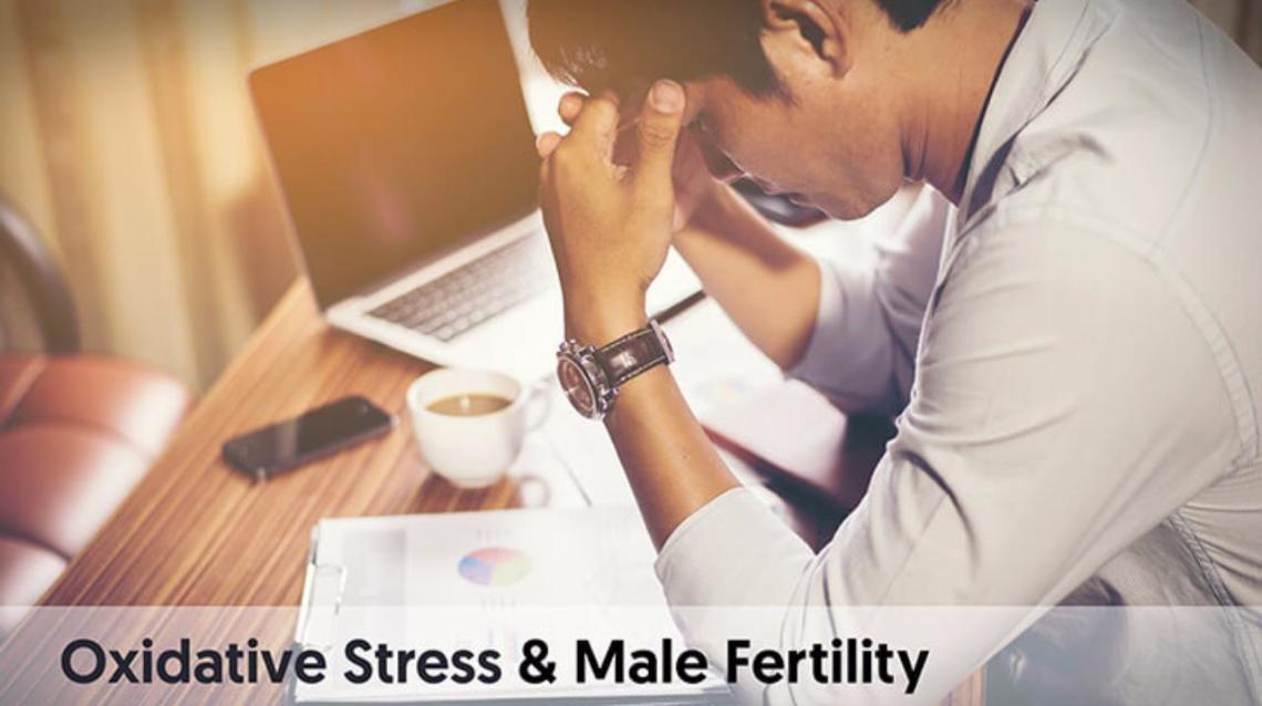 Oxidative Stress & Male Fertility