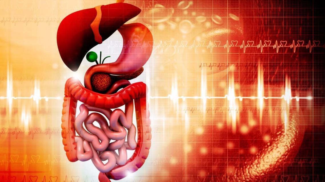Connection Between the Thyroid and Digestion