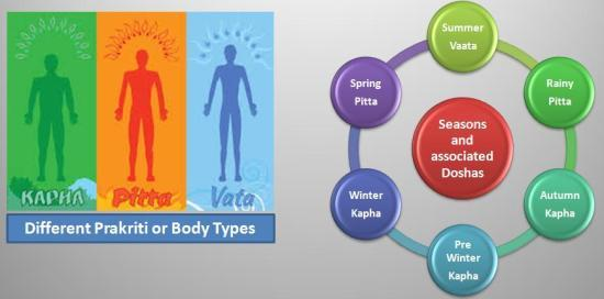 Different Body Types and Dosha aggravation according to the seasons