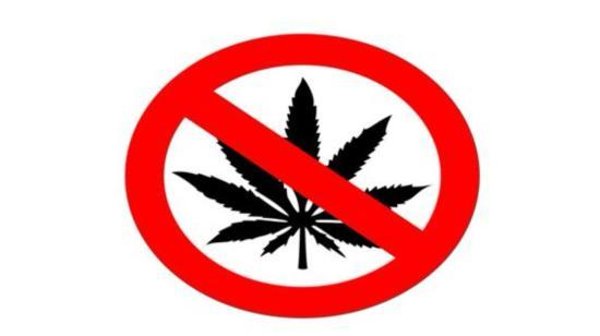 """Why It Is Better to Say """"No"""" to Cannabis?"""