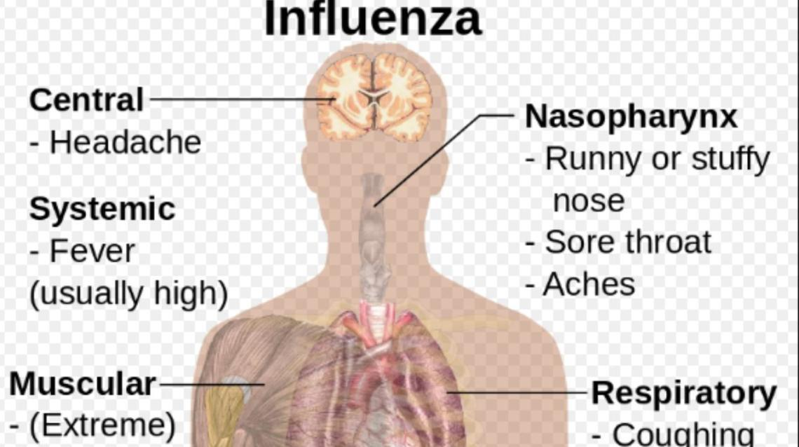 Seasonal Influenza: Current Updates and Health Tips