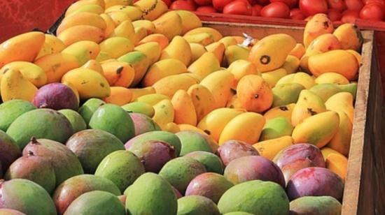 Do Mangoes Make Us Fat/ Are They Safe for Diabetics??