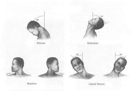 Neck Movements