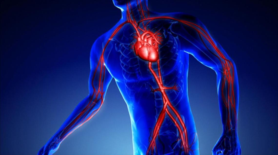 A Brief Introduction to Vascular and Endovascular Surgery: Speciality of a Vascular Surgeon