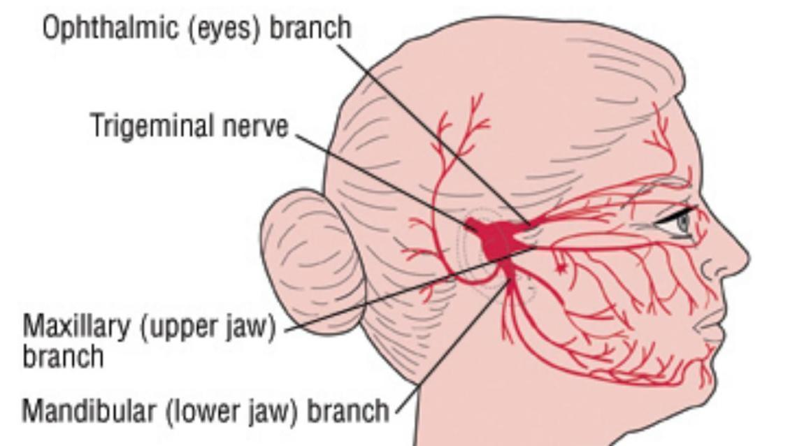 Neuralgia: Types and Treatment Options