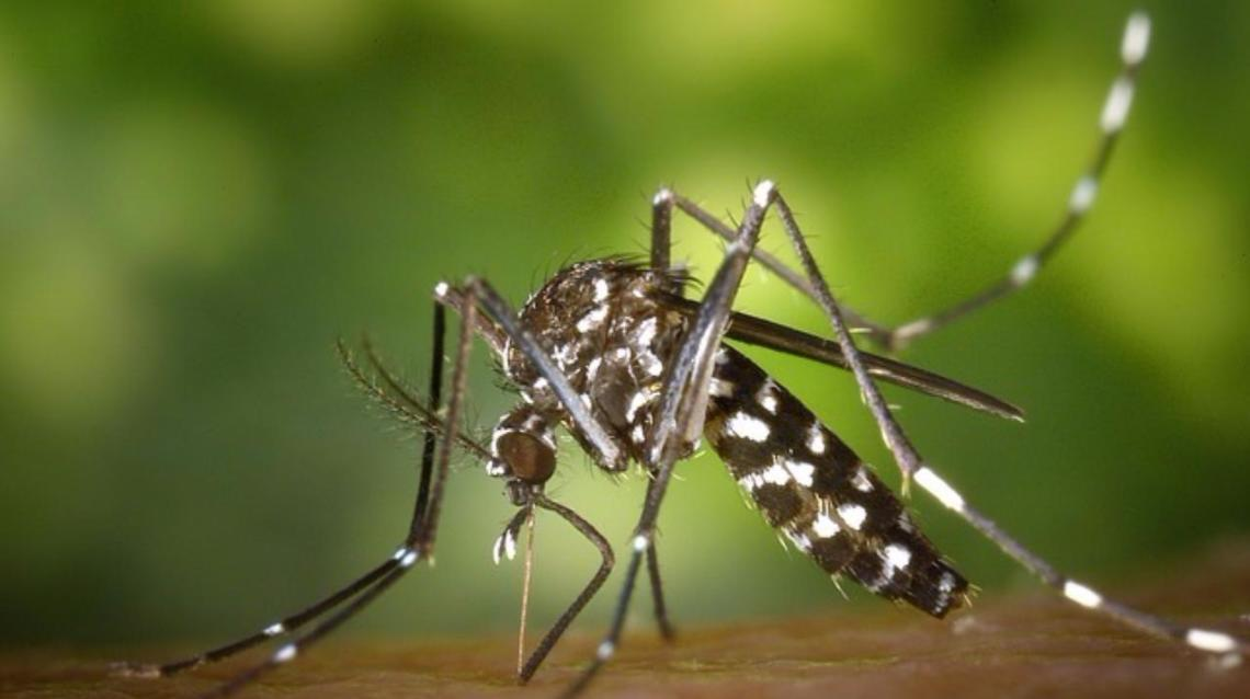 Chikungunya Fever: Not a Life Threatening Illness but Extremely Painful Condition