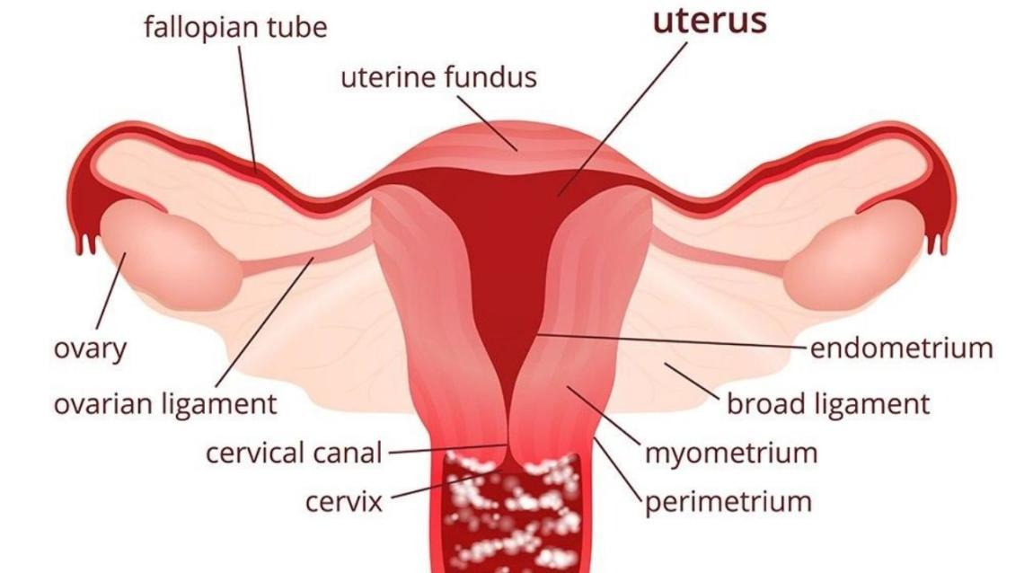 Perineal Itching