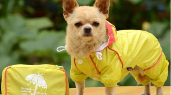 Effective Tips to Keep Your Pet Healthy During Monsoon