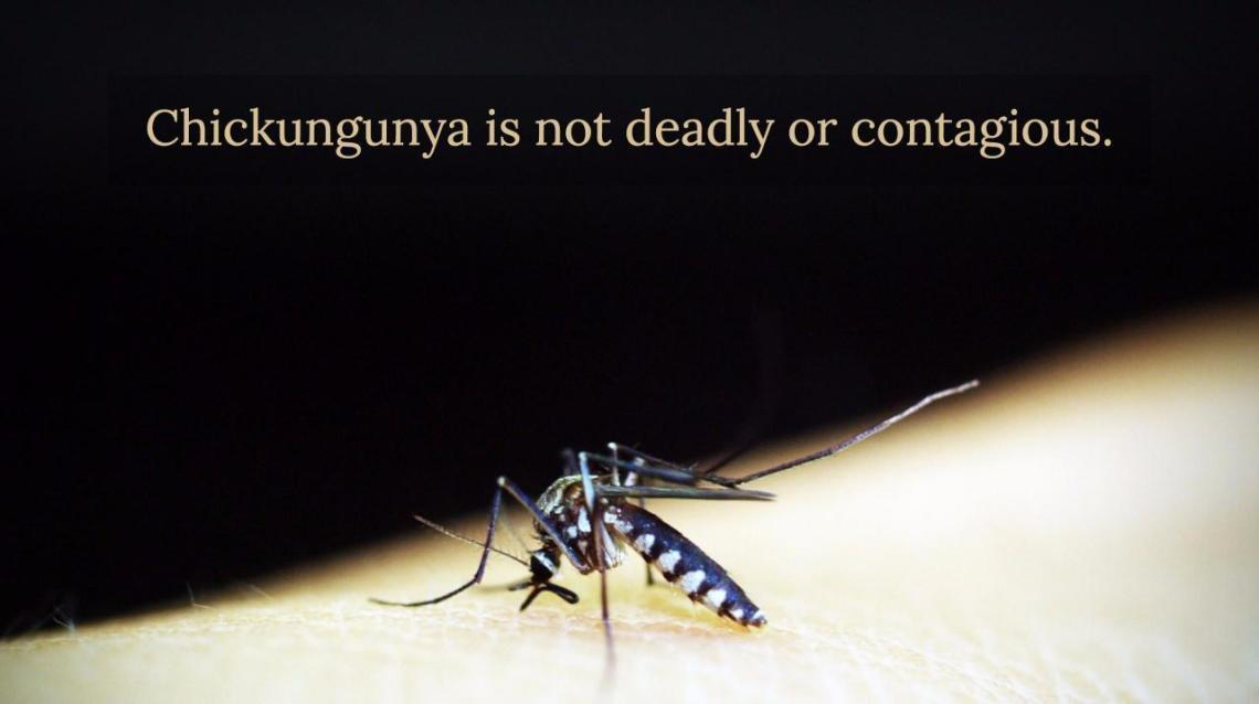 Dont fear chikungunya heres all you need to know!