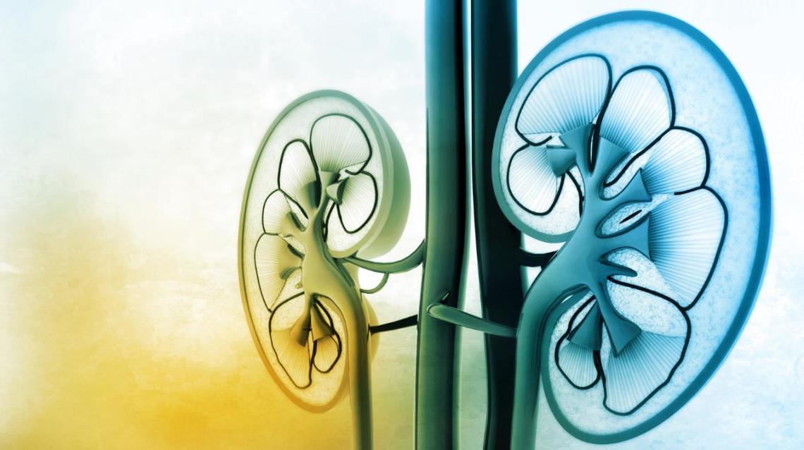 Ayurveda for Kidney Disease – Causes, Symptoms & Treatment